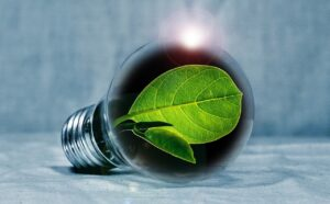 light bulb, leaf, chlorophyll