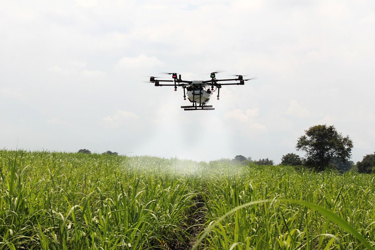 spraying sugar cane, sugar cane, drone farm